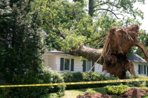 Emergency Tree Removal Services in Abilene - Call 325-480-8891 24/7