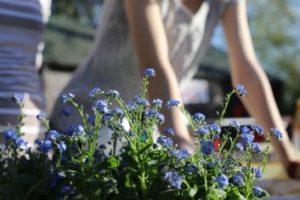 Arborist and Planting Services - Abilene