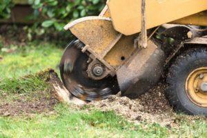 Stump Grinding and Stump Removal in Abilene - Abilene Tree Trimming