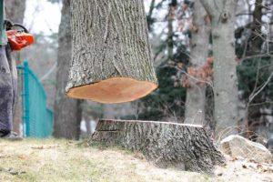 Tree Removal Process in Abilene